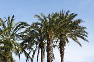 Palm Trees Backdrop
