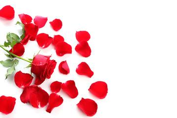 Red Rose & Petals
