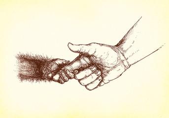 Mensch hält Hand eines jungen Affen