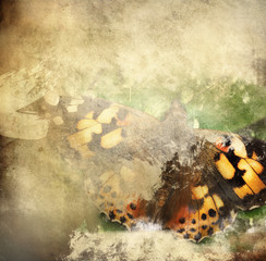 Photo sur Aluminium Papillons dans Grunge Butterfly overlaid with grunge texture