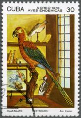 CUBA - 1978: shows stuffed Bird Cuban Red Macaw  - Ara tricolor