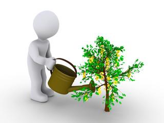 Person watering dollar tree