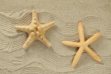 starfish on the beach, vacation memories