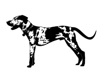 Catahoula, Louisiana Leopard Dog - Silhouette