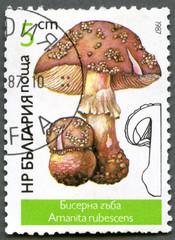 BULGARIA - 1987: shows Amanita rubescens, Mushrooms
