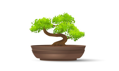 Bonsai tree in ceramic wase