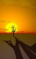 arbre mort dans le désert au soleil couchant