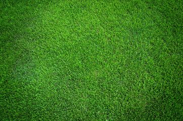 Poster Vert Green grass texture background