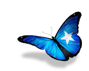 Somalian flag butterfly flying, isolated on white background