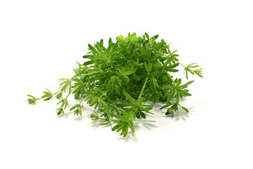 grünes Labkraut