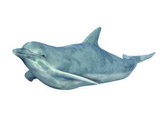 Swimming Dolphin