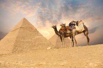 Double Camel Giza Pyramids