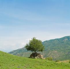 panorama of single tree and mountains in Georgia