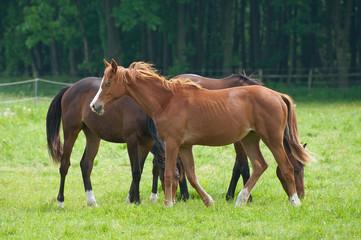 Pferde 521