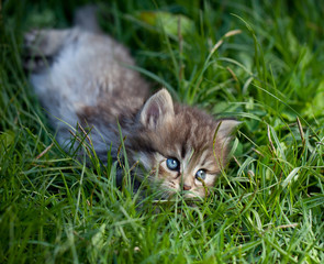 Small cat on a grass