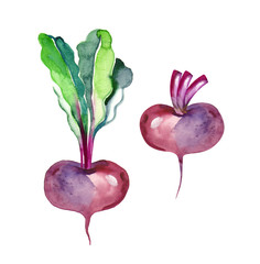 Watercolor Beetroot