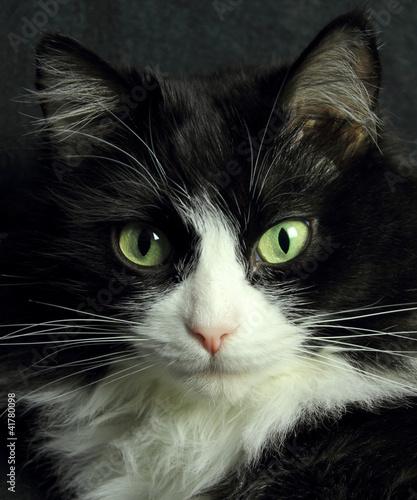 Noir chatte ébène sexe