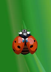 Realistic ladybug
