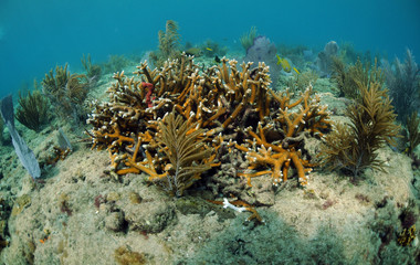 Coral and sea fans underwater