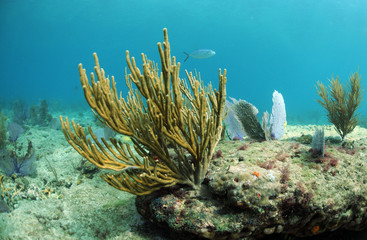 Wall Mural - Soft coral in ocean