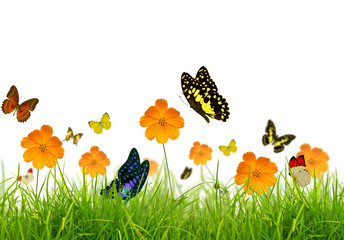 Yellow flowers, green grass and butterfly
