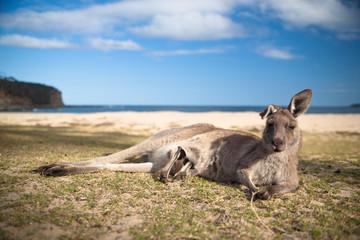 Foto op Aluminium Kangoeroe mother kangaroo