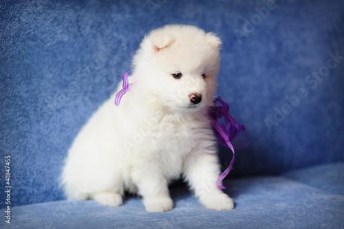 Белый щеночек загрузить