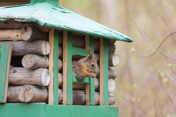 squirrel in a wooden lodge