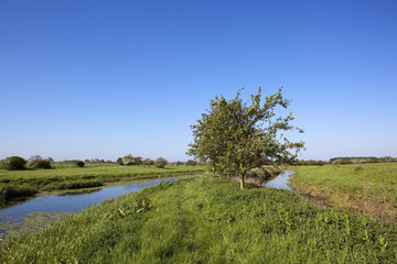 summer water meadows