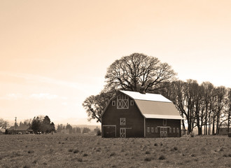 Vintage Barn In Field Sepia Tone