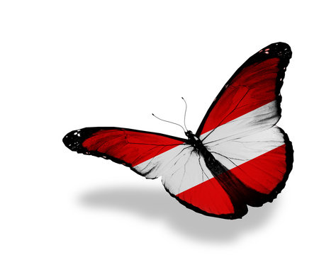 Austrian flag butterfly flying, isolated on white background
