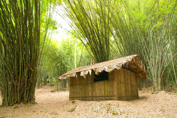 Bamboo house in the jungle
