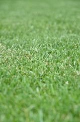 Green grass - front view Texture