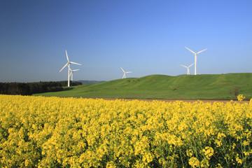 風力発電と菜の花畑