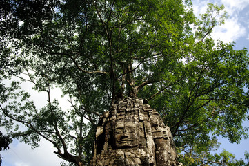 a pillar in ta prohm temple with tree