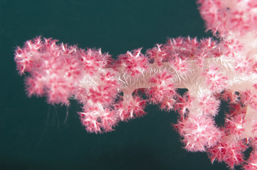 Closeup of tropical soft coral