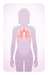 lungs highlighted on the silhouette of a woman