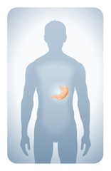 stomach highlighted on the silhouette of a men