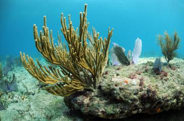 Wall Mural - Coral reef