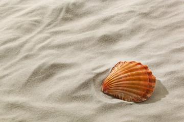 Muschel an einem Sandstrand