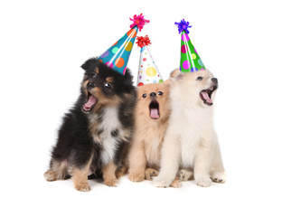Puppies Singing Happy Birthday Wearing Party Hats