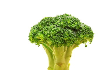 Fresh broccoli in closeup on white background