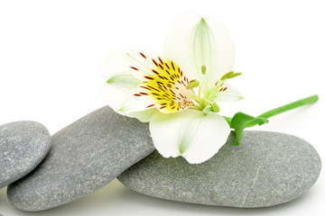 Lily flower and pebble.