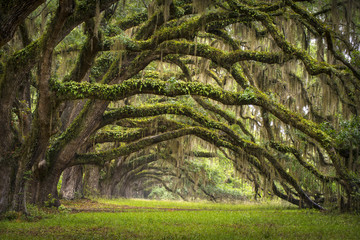 Fotobehang Bos Oaks Avenue Charleston SC plantation Live Oak trees forest