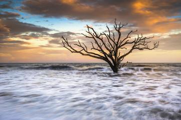 Botany Bay Edisto Island SC Beach Sunset Landscape Charleston