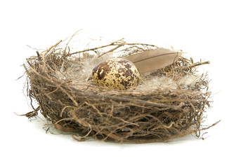 egg in a nest on a white background