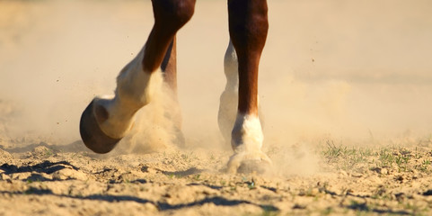 Hooves of horse