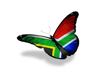 South Africa flag butterfly flying, isolated on white background