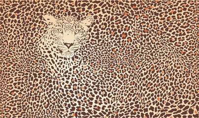 Pattern background leopard