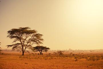 Printed kitchen splashbacks Beige African landscapes